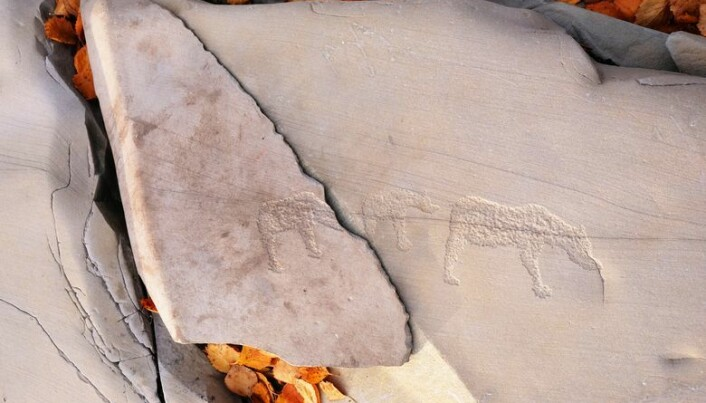 Og her er bjørnungen endelig hjemme hos mor. Der fikk den imidlertid ikke bli lenge. Steinen er så liten at vi ikke tør ha den liggende ute, og det gir oss også en mulighet til å vise mer av bergkunsten inne i museet, sammen med andre løse blokker med helleristninger som av forskjellige årsaker har blitt flyttet dit.