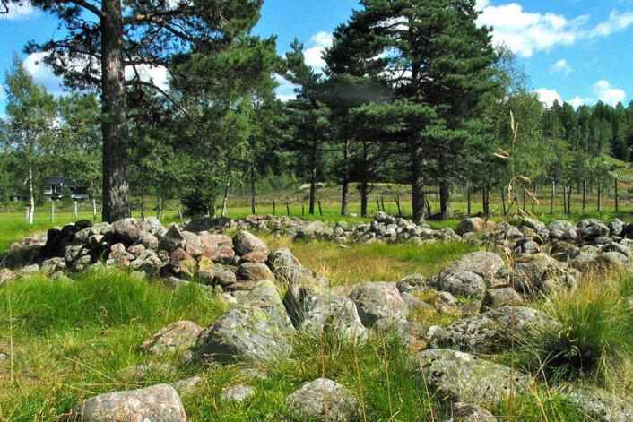 Jernaldergården Sosteli i Vest-Agder. Her ble det dyrket hamp ved inngangen til vikingtida, viser nye, overraskende funn. (Foto: Morten Teinum/Visit Sørlandet)