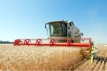 Avlinger i land over hele verden blir påvirket av El Niño. Nå vet vi hvor mye, og det kan hjelpe både bønder og politikere. (Foto: Sergbob/Microstock)