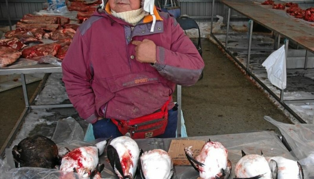 Efraim selger alker og reinsdyrkjøtt i Nuuk, hovedstaden på Grønland. På få tiår har Grønland gått fra et tradisjonelt fangssamfunn til et moderne samfunn. Aftenposten
