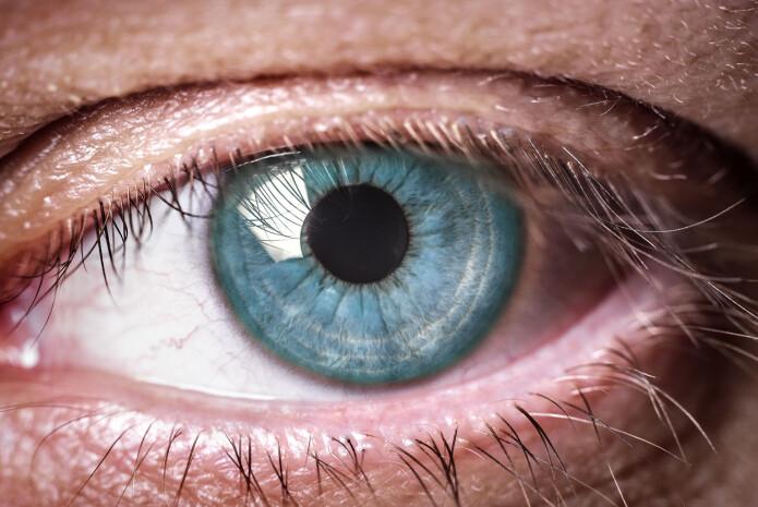 Menneskets øye fungerer ganske bra. Men blekksprutens øye er en bedre konstruksjon.