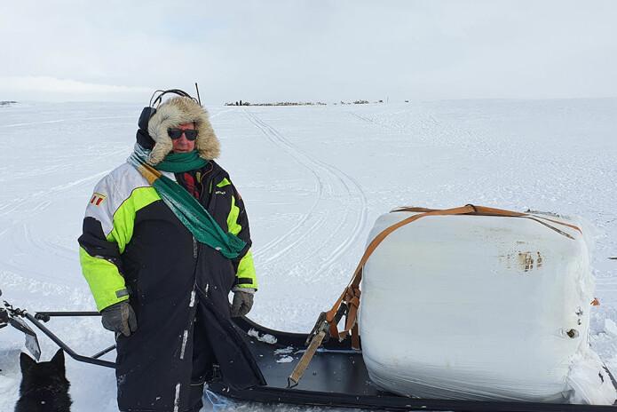 Nils Johan Bongo, som er broren til Mikkel P. Bongo, har her akkurat kommet fram til flokken med en 1200-kilos rundballe på et flakslep etter snøskuteren. Ifølge brødrene er det mye arbeid hele døgnet, tunge lass og en utfordring å fôre, når de ikke har gjort det før.