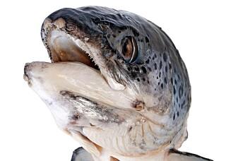 Fisk som trener blir smartere