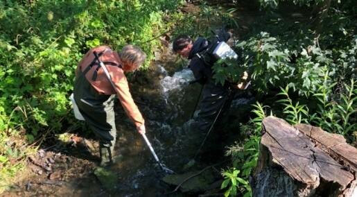 Funn av miljøgifter i bekker og elver i Oslo