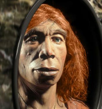 """""""Neandertalerne hadde garantert ingen speil på veggen, men slik ser forskere for seg at de kan ha sett ut. Neandertalerne var en menneskeart som var kraftigere og større enn homo sapiens, og med et hjernevolum som var relativt likt. Likevel tok Cro Magnon-mennesket fullstendig luven av neandertalerne. Etter bare rundt 15 -20 000 års sameksistens, var neandertalerne historie."""""""