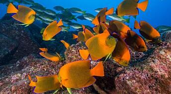 Livet i havet kan gjenreises innen få tiår, ifølge studie