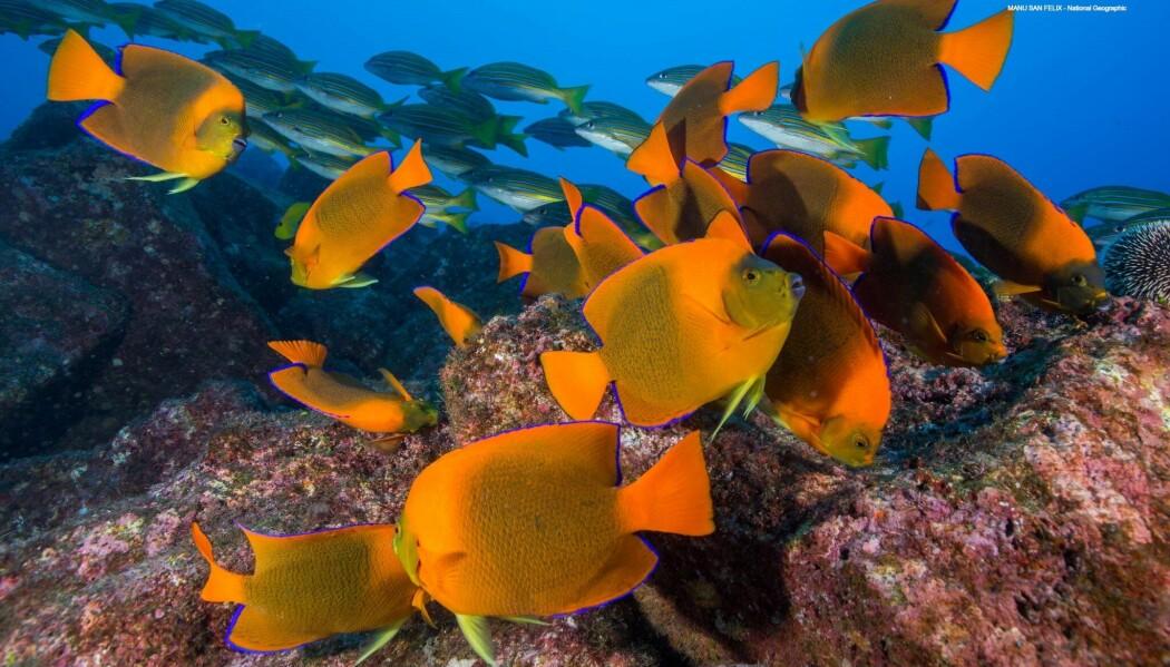 I en ny studie som er publisert i Nature, legger forskerne fram en plan for hva som som skal til for at vi får et sunt hav i fremtiden.