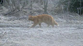 Greier du å se hvilket dyr som er fanget med viltkamera?