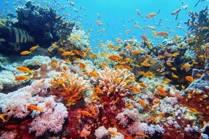 Korallrev er spesielt sårbare for høyere temperatur i havet.