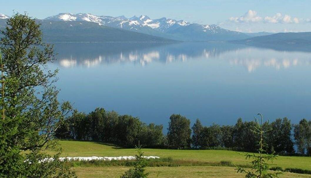 Anders Bryn, Skog og landskap