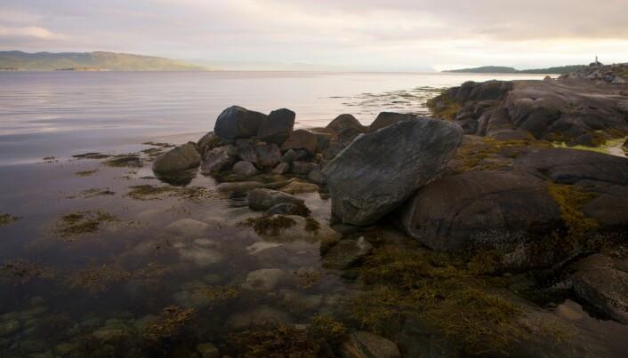 Tang gir leveområder for krabber og småfisk.