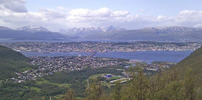 Torsken forskerne fra NILU ved Framsenteret hentet prøver fra ble fanget på to ulike steder: Ved Tromsøsund, like utenfor Tromsø by (bildet), og ved Nipøya, ca. 30 km nordøst for byen. (Foto: Eldbjørg S. Heimstad, NILU)