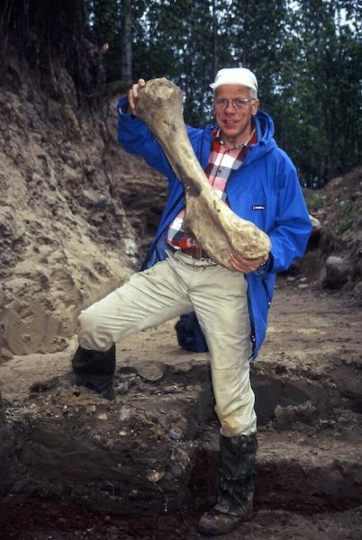 Professor Jan Mangerud fra Universitetet i Bergen med et kjempemessig lårbein av et ullhåret neshorn. Bildet er tatt under utgravningene i Ural. (Foto: Science/AAAS)