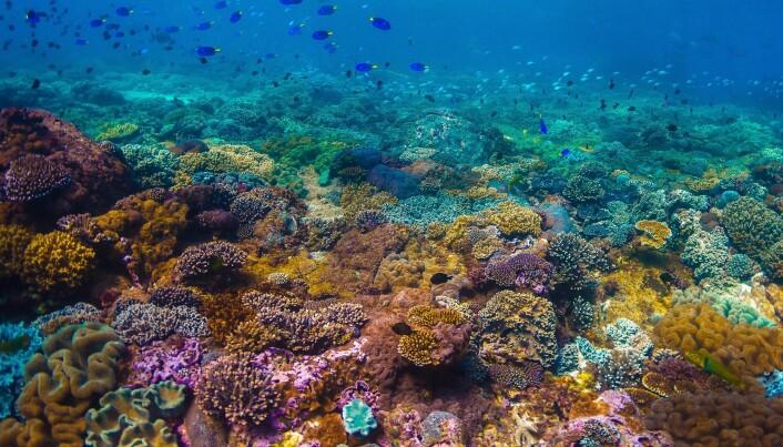 Koraller får fargene sine fra alger som de lever i et symbiotisk forhold med. Når algene forsvinner blir korallene hvite og mister sin viktigste kilde til næring.