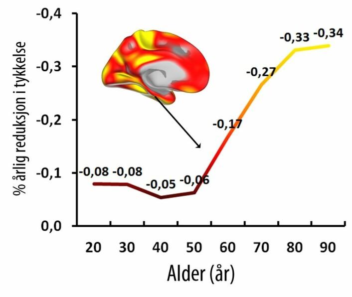"""""""Knekkpunktet"""" for endringene i hjernebarken ligger rundt 60-år. Det vil si at det er da det for alvor setter i gang. (Foto: Figur: Walhovd)"""