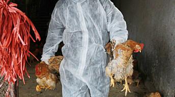 - Nytt fuglevirus smitter mellom mennesker