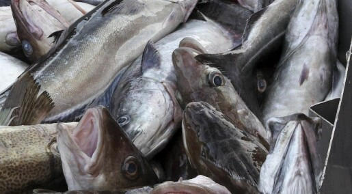 Finner fuktighetskrem i torsken
