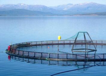 """""""Knapphet på tradisjonelle fórråvarer er en av de viktigste utfordringene havbruksnæringen må møte for å kunne produsere laks, torsk, og annen oppdrettsfisk på bærekraftig vis. For å bli etterspurt, sunn og god sjømat må fisken også være frisk og ha det bra i merdene. (Foto: AKVA GROUP ASA)."""""""