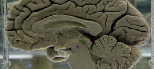 Hvorfor har vi så stor hjerne?