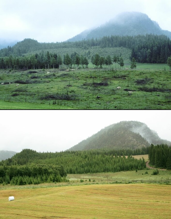 Nydyrking av jord er en måte å øke norsk matproduksjon på, men det er ikke mulig å få til overalt. Her ser vi to bilder fra et område i Nord-Trøndelag, der det øverste viser hvordan området så ut før det ble nydyrket i år 2000, og det nederste viser hvordan området ser ut etter nydyrking i år 2010. (Foto: Oskar Puschmann, Skog og landskap)