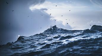 Derfor er det bra med masse virus i havet