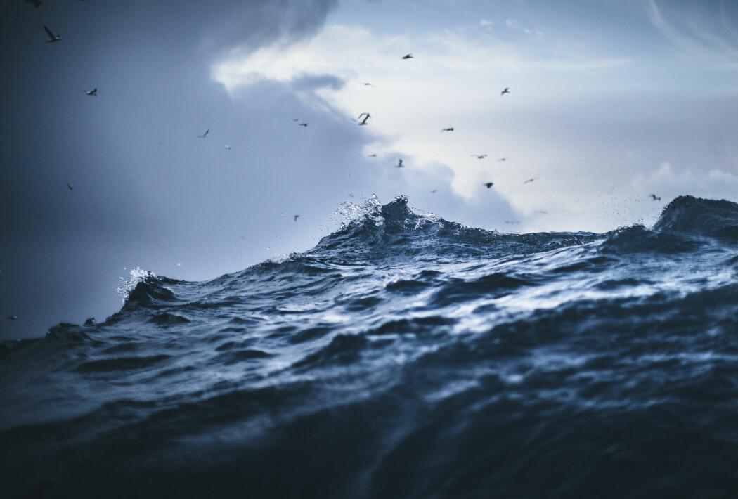 I havet som på jorden ellers, er det enorme mengder virus.