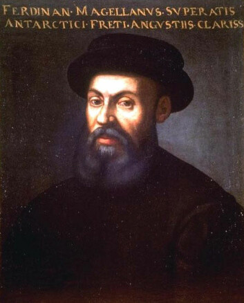 Sannsynligvis det eneste oppdagelsesfareren Ferdinand Magellan og grantreet i Trillemarka har til felles, er fødselsåret. Magellan er blitt til jord siden den gang, men grana står fortsatt og vokser. (Foto: (Bilde: Wikimedia Creative Commons))