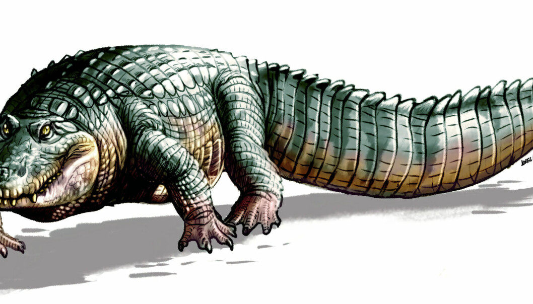 Crocodylus falconensis kunne bli over fire meter lang. (Illustrasjon: UZH)