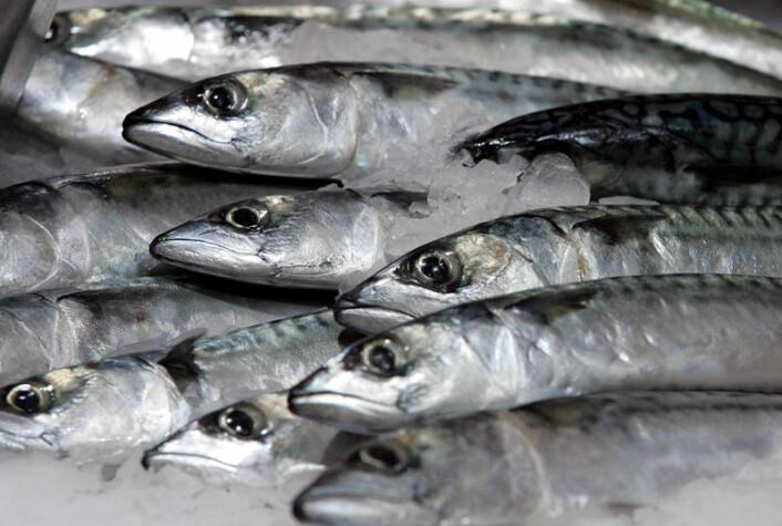 Europeiske forbrukere mener sild og torsk er mindre sunt enn laks (Foto: Colourbox)