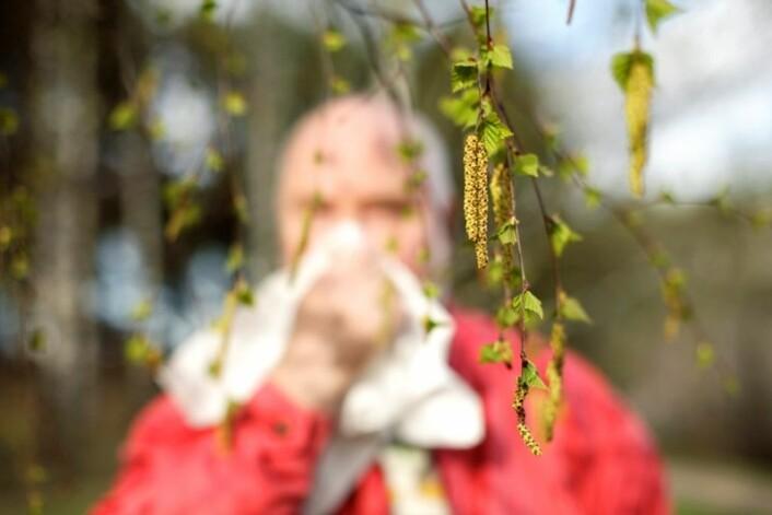 Vil allergikere få det verre i årene som kommer? Ja, både i by og bygd, mener forskere bak ny studie. (Foto: Colourbox)