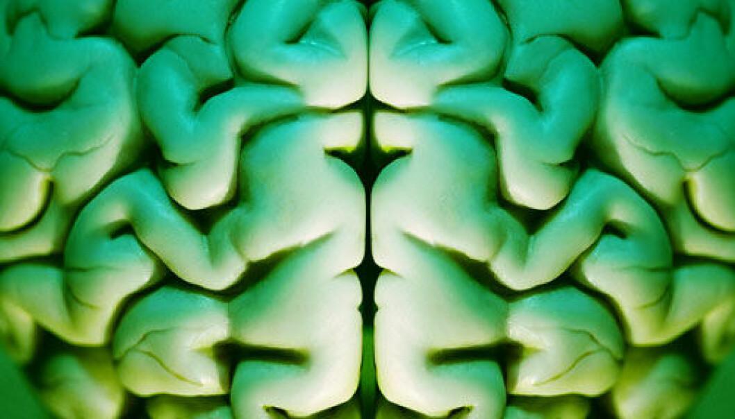 Forskarar hausta levande celler frå døde hjernar, og omprogrammerte dei til stamceller. (Foto. www.colourbox.com)