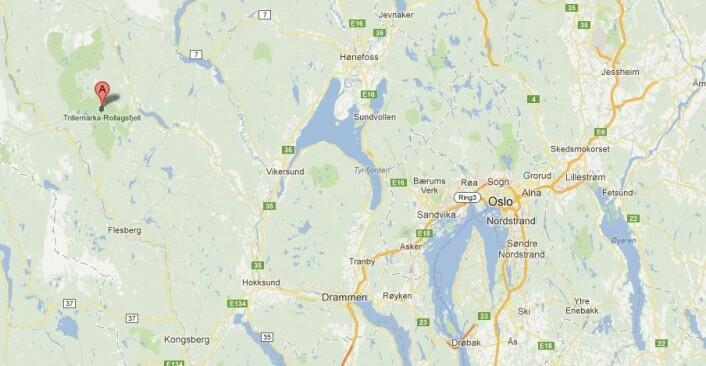 I Trillemarka, vest for Vikersund og Prestfoss i Buskerud, gjemmer det eldste levende grantreet på vår del av Europa seg. (Foto: (Bilde: skjermdump fra Google Maps))