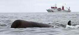 Delfin og nise kan miste høyrselen av støy i havet