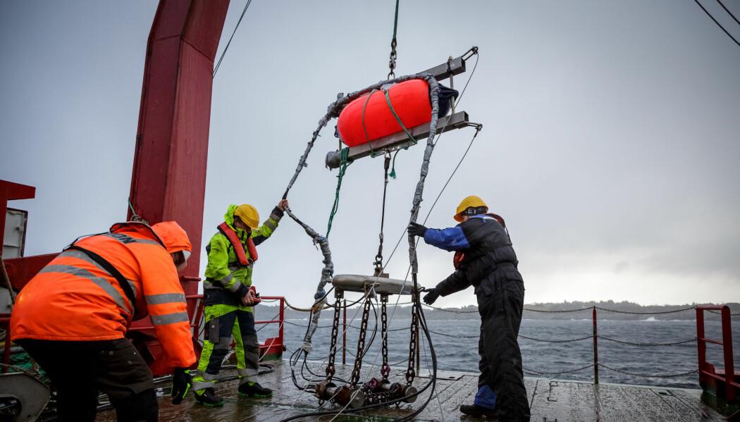 Forskarane har testa korleis seismikk på påverke livet i havet på mange nivå. I februar 2020 undersøkte dei korleis torsk reagerer på seismikk.