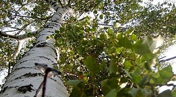 Trærnes ti på topp