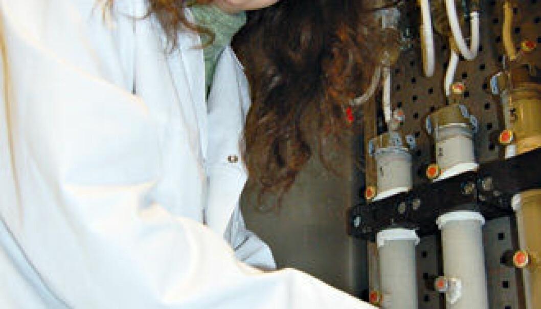 """""""Brysomme bakterier: Stipendiat Frøydis Garshol tar ut bakterier som teamet får til å vokse i laboratoriet. I glassrørene simuleres hva som skjer i oljereservoaret.(Foto: Reidar Müller)."""""""