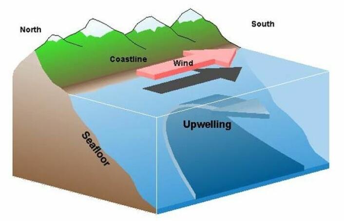 Oppstrømming: Grafikken illustrerer at kaldt, tungt og næringsrikt bunnvann kommer opp og erstatter overflatevannet. (Foto: (Illustrasjon: Wikipedia))