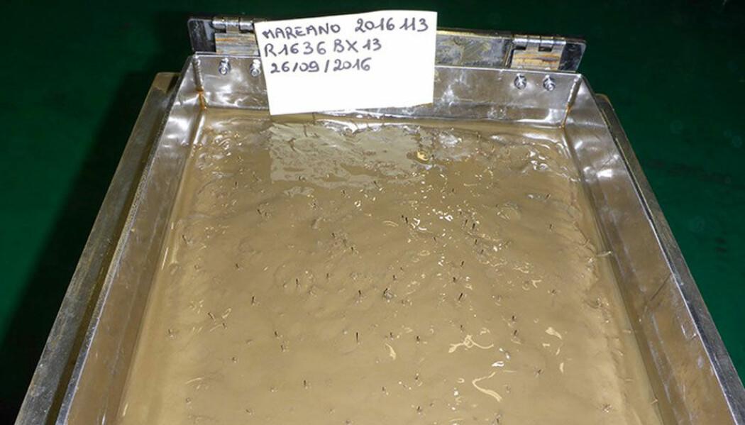 Bokscorer med prøve. Bildet viser uberørt sedimentoverflate klar for uttak av prøven.