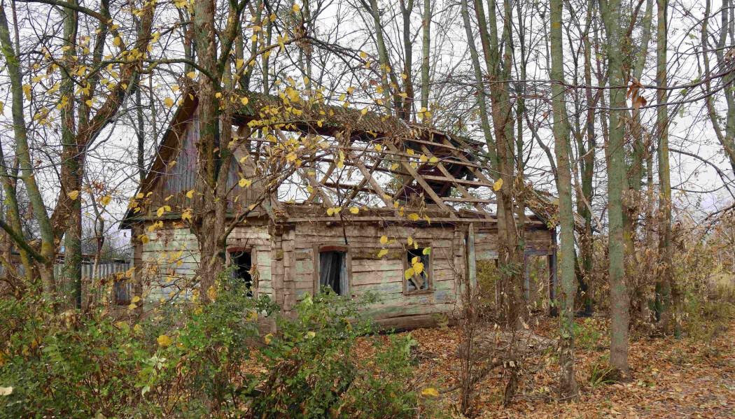 Et forlatt hus nær Tsjernobyl.