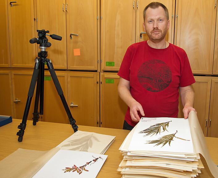 Tommy Prestø bidrar med det som finnes av vier-sorter i Norge til strekkodebiblioteket. (Foto: Georg Mathisen)