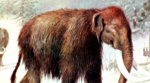 Mammuten kan bli gjenfødt om fire år