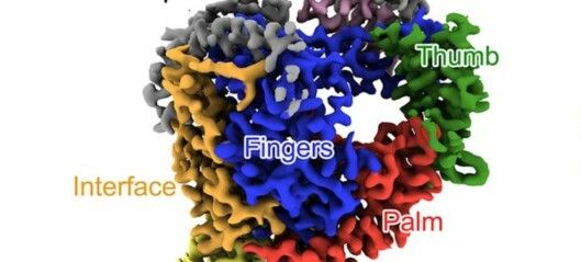 Jakten på koronamedisiner: Kinesiske forskere har avdekket formen på et viktig korona-enzym