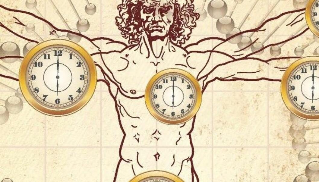 Ny metode kan fortelje alderen kroppens ulike vevstypar. UCLA/Horvath lab