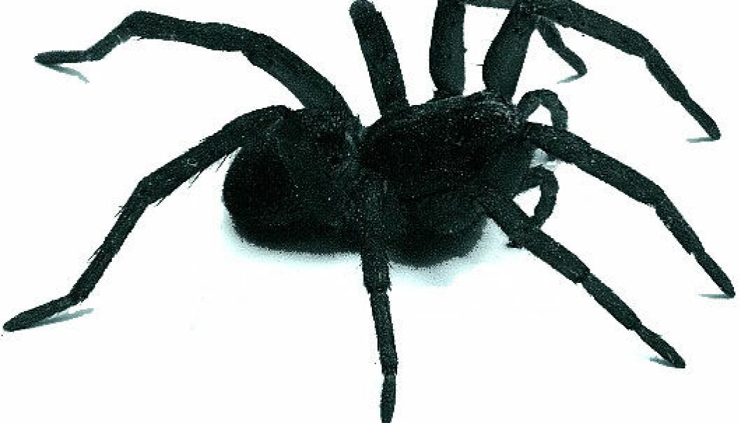 """""""Edderkoppskrekk? I så fall gjorde du nok store øyne da du så denne."""""""