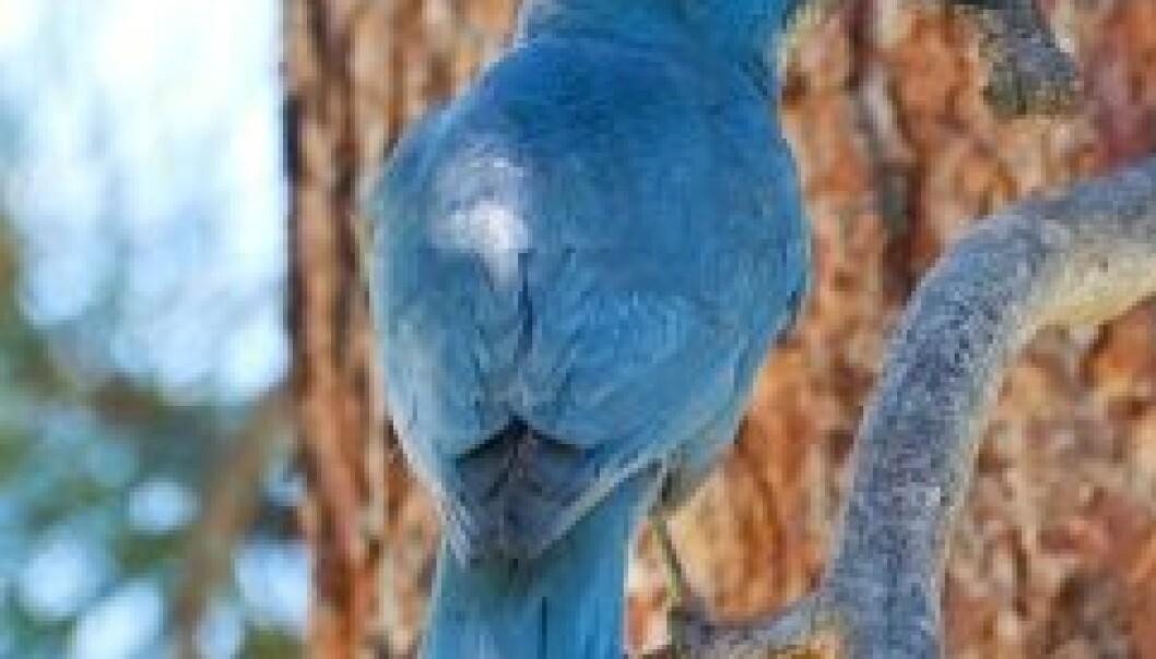 Fugler med PMS
