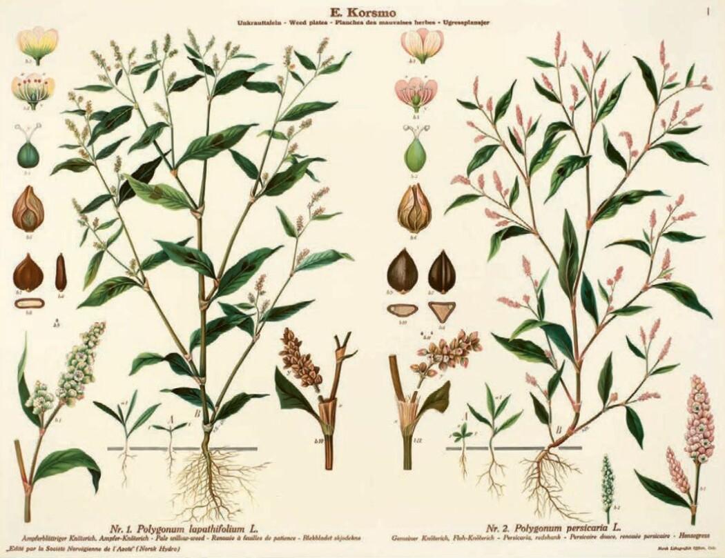 Illustrasjonene viser til sammen 138 arter fordelt på 90 plansjer.