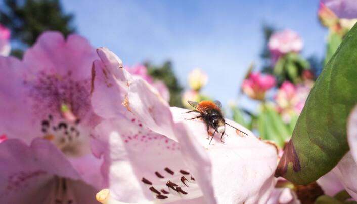 Forskerne fant at det har blitt mindre av både flyvende insekter og de som lever på bakken.