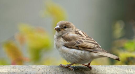 Ny studie i suspekt tidsskrift: Hva er greia med fugler?