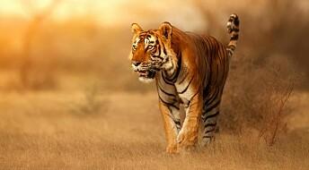 Hvorfor er det flere farlige dyr i tropene?