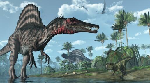 Verdens største rovdinosaur kunne trolig svømme